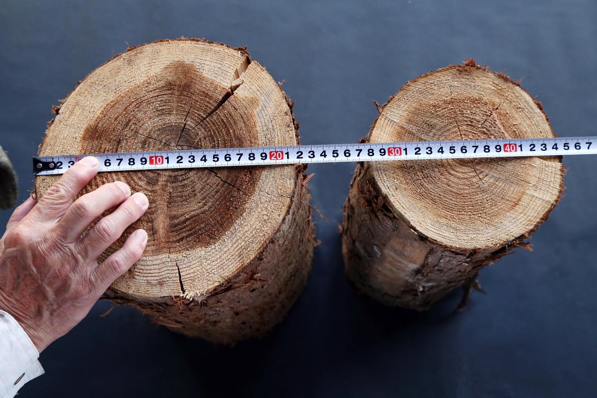 スギ 100% 丸太40cm(未乾燥)